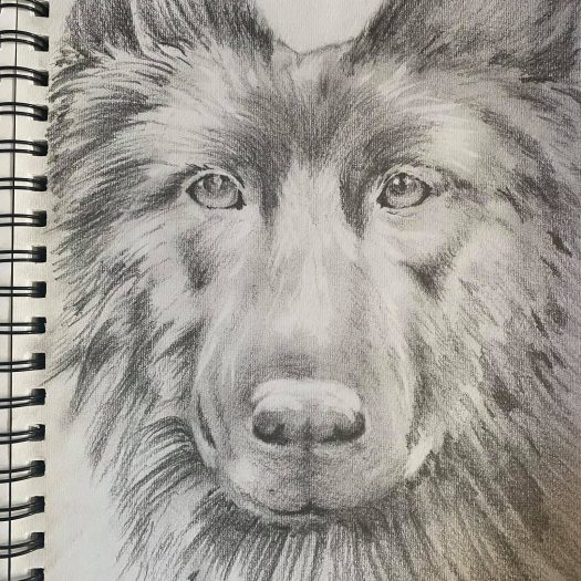 Dog Drawing by Ryan Swain
